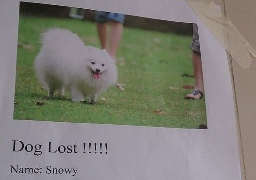 Lost_dog_notice